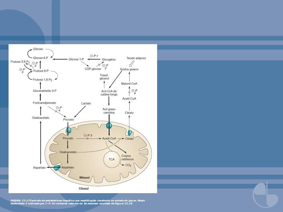 FIGURA 22.17Controle do metabolismo hepático por modificação covalente no estado de jejum.