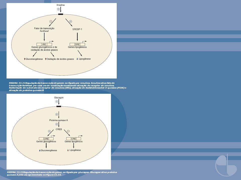 FIGURA 22. 21Regulação da transcrição de genes no fígado por insulina