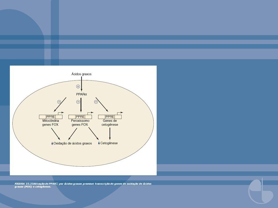 FIGURA 22.23Ativação de PPAR por ácidos graxos promove transcrição de genes de oxidação de ácidos graxos (FOX) e cetogênese.