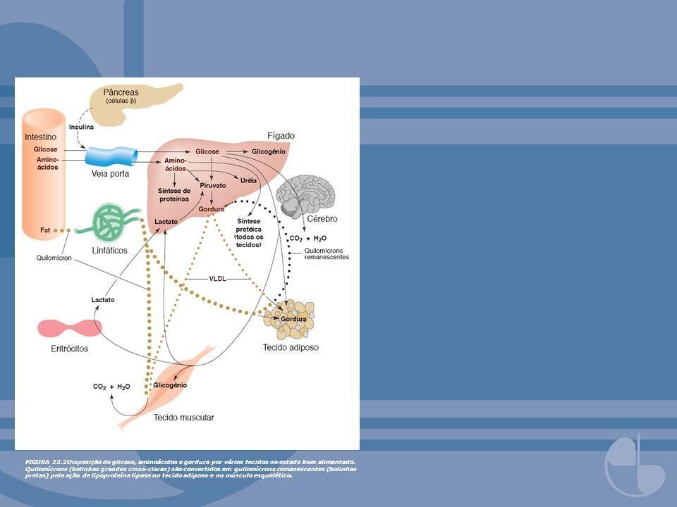 FIGURA 22.2Disposição de glicose, aminoácidos e gordura por vários tecidos no estado bem alimentado.