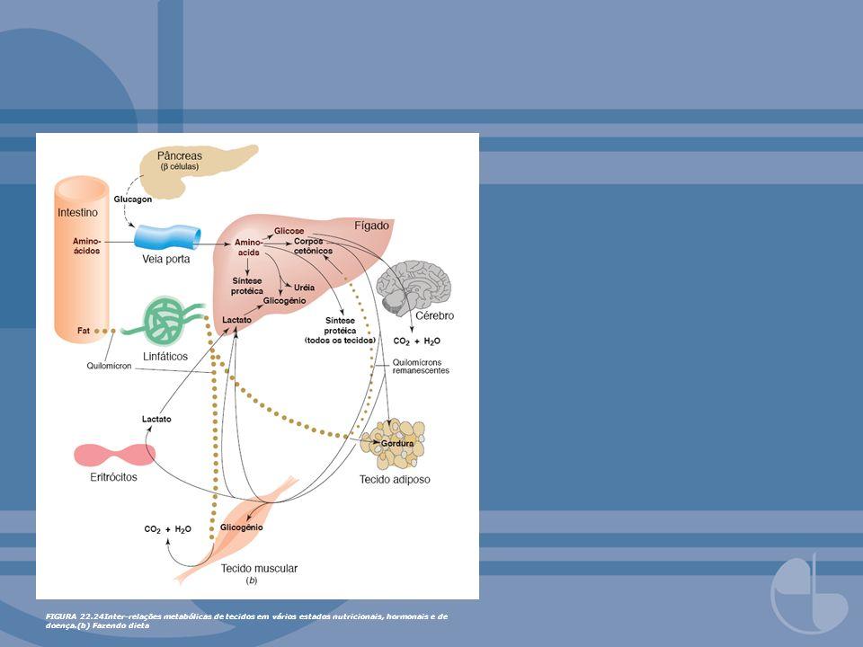 FIGURA 22.24Inter-relações metabólicas de tecidos em vários estados nutricionais, hormonais e de doença.(b) Fazendo dieta