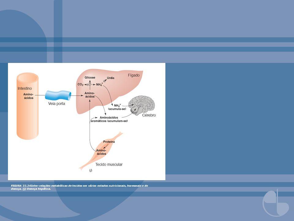 FIGURA 22.24Inter-relações metabólicas de tecidos em vários estados nutricionais, hormonais e de doença.