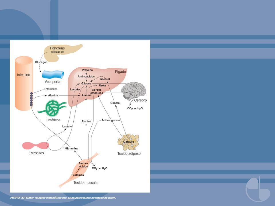 FIGURA 22.4Inter-relações metabólicas dos principais tecidos no estado de jejum.