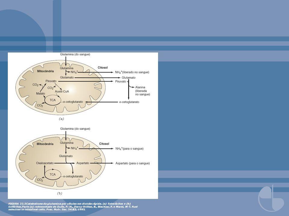 FIGURA 22. 5Catabolismo da glutamina por células em divisão rápida