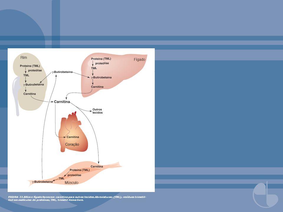 FIGURA 22. 8Rim e fígado fornecem carnitina para outros tecidos