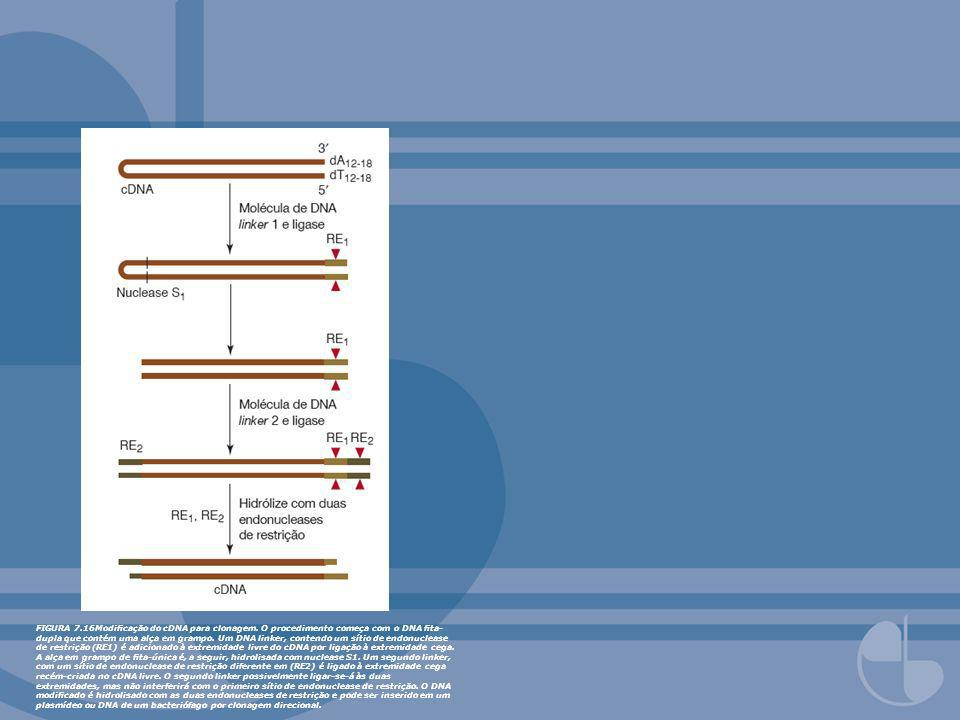 FIGURA 7. 16Modificação do cDNA para clonagem
