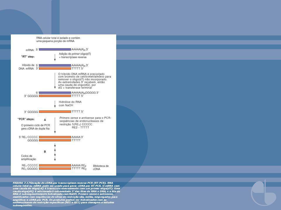 FIGURA 7. 17Geração de cDNA por transcriptase reversa-PCR (RT-PCR)