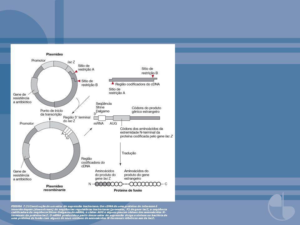 FIGURA 7. 21Construção de um vetor de expressão bacteriano
