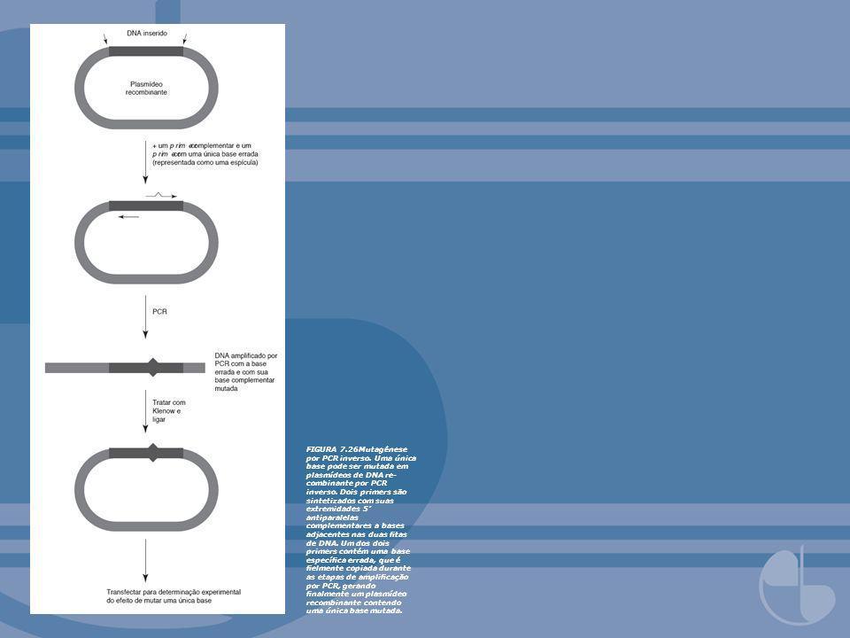 FIGURA 7. 26Mutagênese por PCR inverso