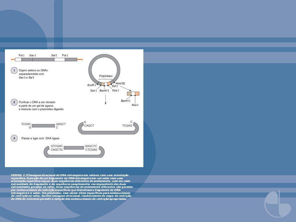 FIGURA 7.7Clonagem direcional de DNA estrangeiro em vetores com uma orientação específica.