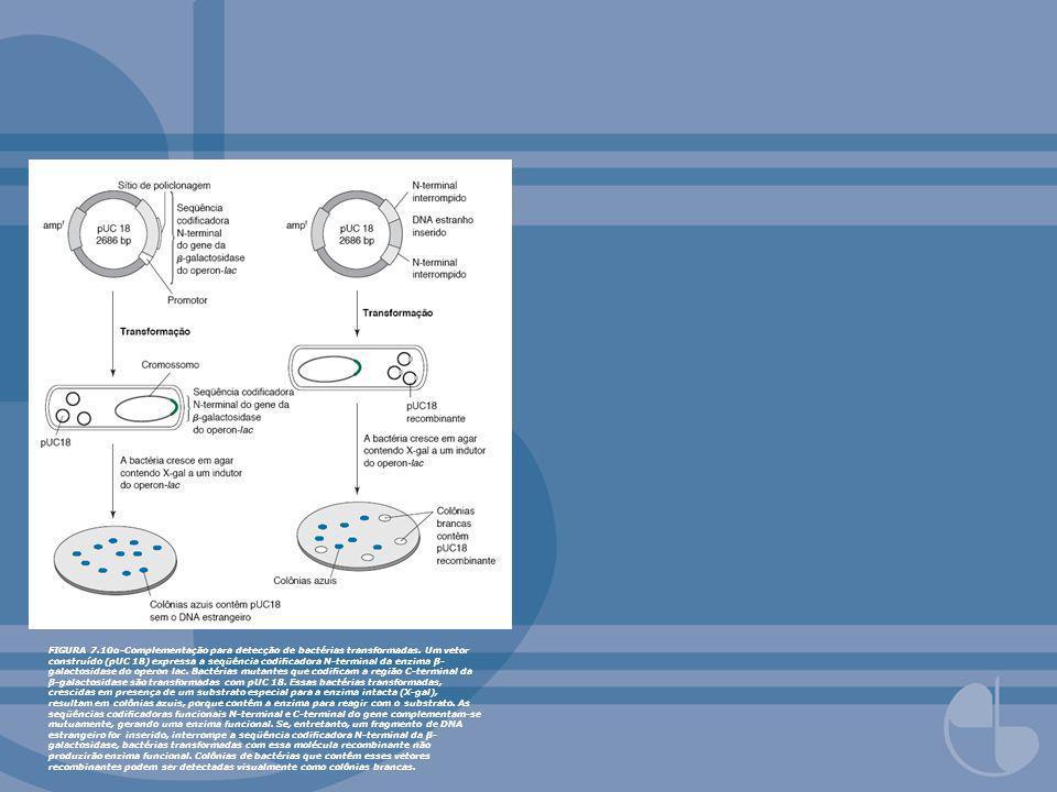FIGURA 7. 10α-Complementação para detecção de bactérias transformadas