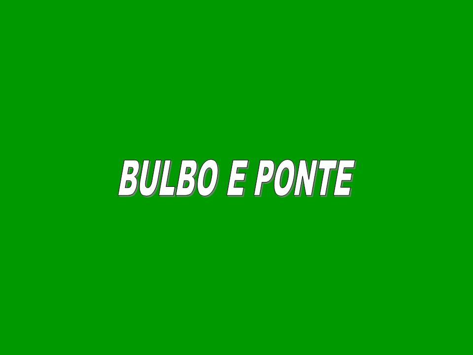 BULBO E PONTE