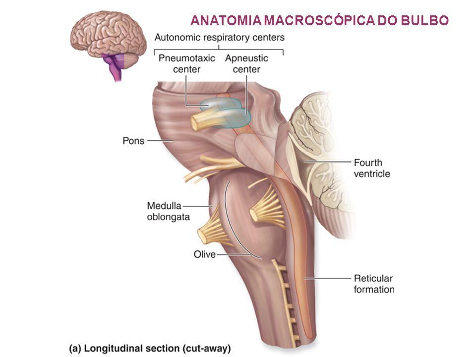 Magnífico Anatomía Macroscópica 1989 Regalo - Anatomía de Las ...