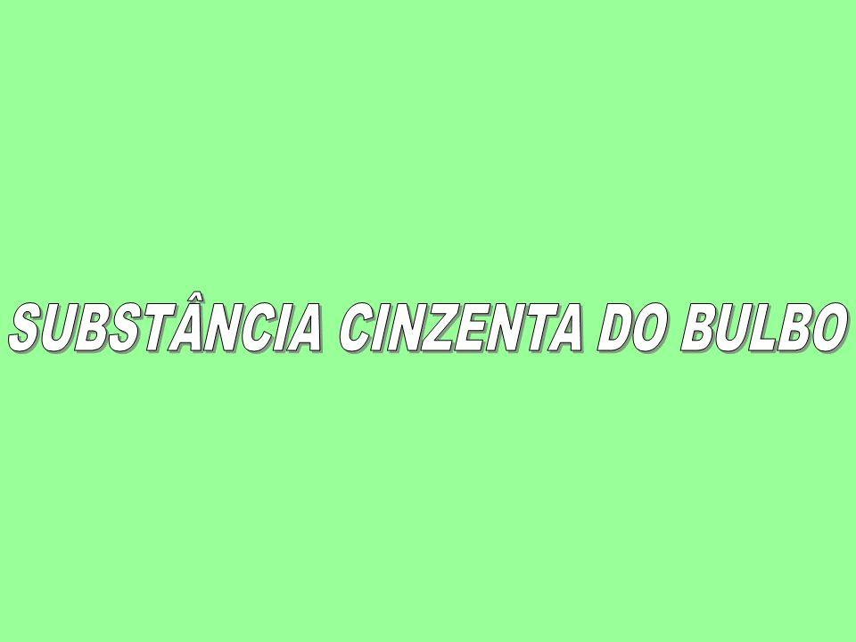 SUBSTÂNCIA CINZENTA DO BULBO