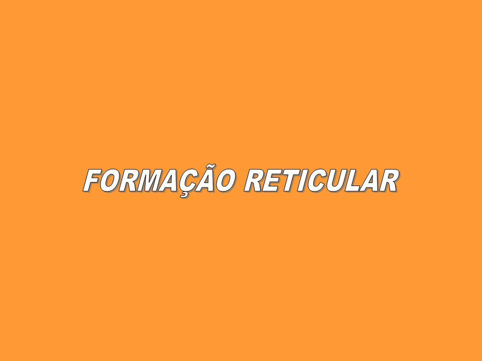 FORMAÇÃO RETICULAR