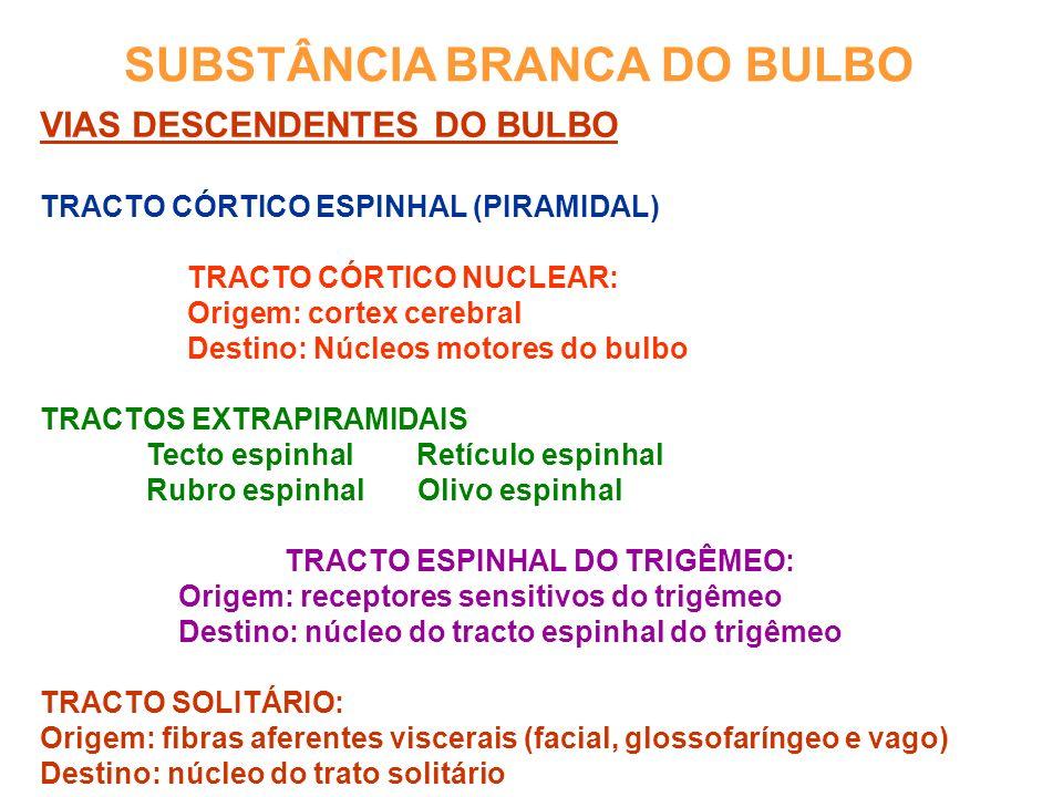 SUBSTÂNCIA BRANCA DO BULBO