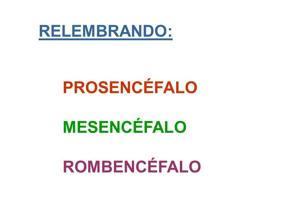 RELEMBRANDO: PROSENCÉFALO MESENCÉFALO ROMBENCÉFALO