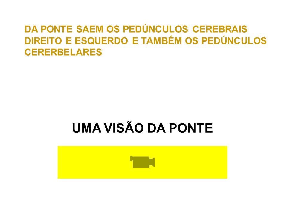 UMA VISÃO DA PONTE DA PONTE SAEM OS PEDÚNCULOS CEREBRAIS