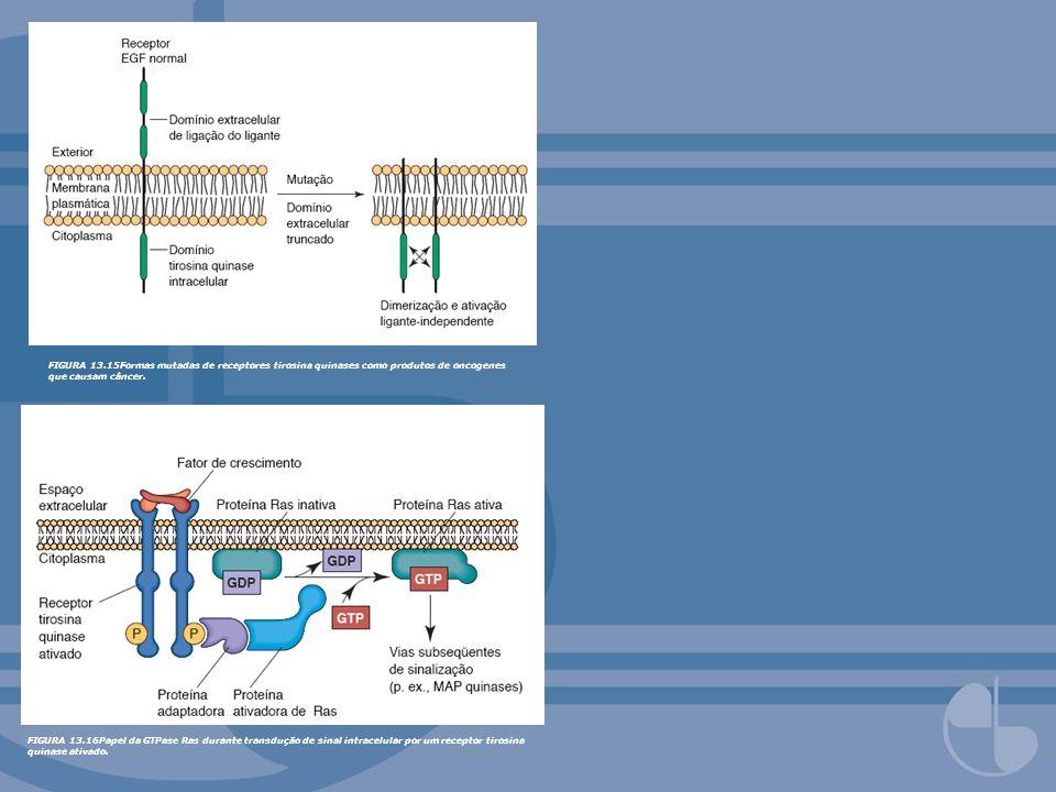 FIGURA 13.15Formas mutadas de receptores tirosina quinases como produtos de oncogenes que causam câncer.