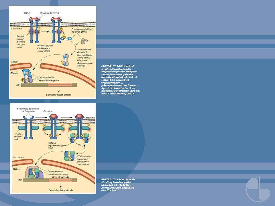 FIGURA 13.18Cascatas de sinalização intracelular disparadas por um receptor serina/treonina quinase durante ativação por TGF- (fator de crescimento transformador ).Redesenhado com base em figura de Alberts, B., et al. Essential Cell Biology, 2nd ed. New York: Garland, 2004.