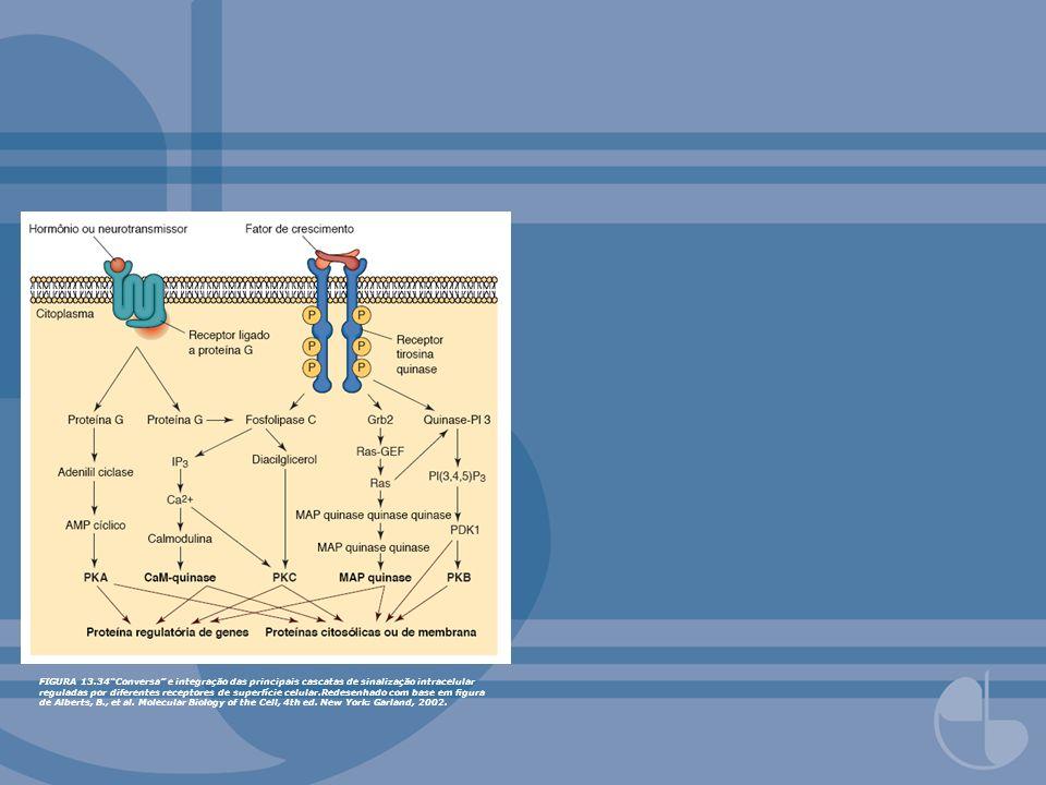 FIGURA 13.34 Conversa e integração das principais cascatas de sinalização intracelular reguladas por diferentes receptores de superfície celular.Redesenhado com base em figura de Alberts, B., et al.