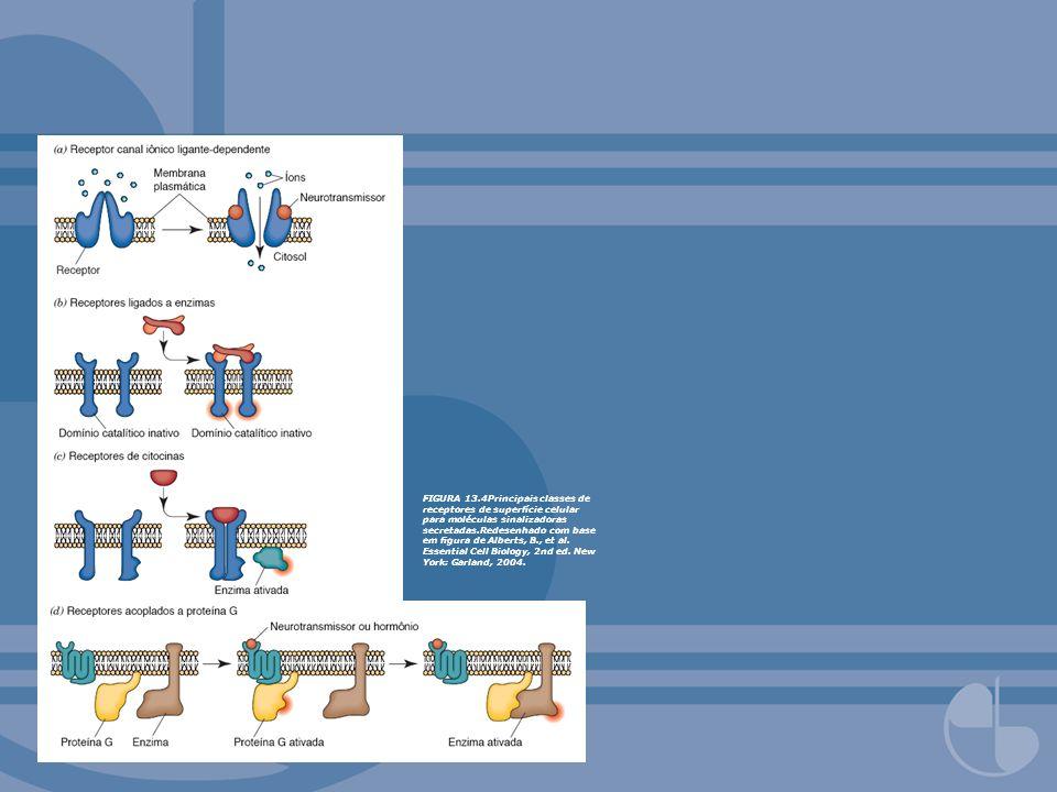 FIGURA 13.4Principais classes de receptores de superfície celular para moléculas sinalizadoras secretadas.Redesenhado com base em figura de Alberts, B., et al.