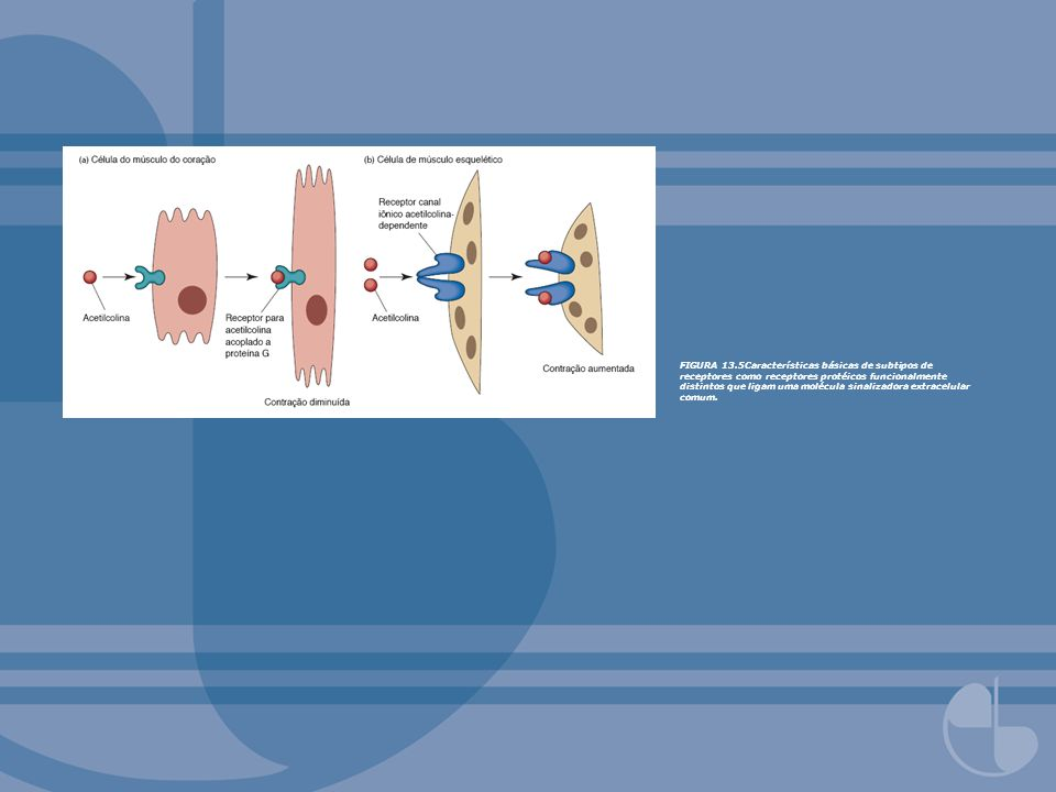 FIGURA 13.5Características básicas de subtipos de receptores como receptores protéicos funcionalmente distintos que ligam uma molécula sinalizadora extracelular comum.