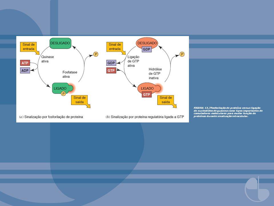 FIGURA 13.7Fosforilação de proteína versus ligação de nucleotídeo de guanina como tipos importantes de comutadores moleculares para mudar função de proteínas durante sinalização intracelular.