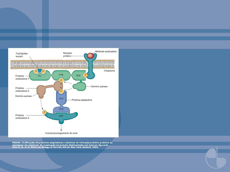 FIGURA 13.8Funções de proteínas adaptadoras e domínios de interação proteína-proteína na montagem de complexos de sinalização intracelular.Redesenhado com base em figura de Alberts, B., et al.