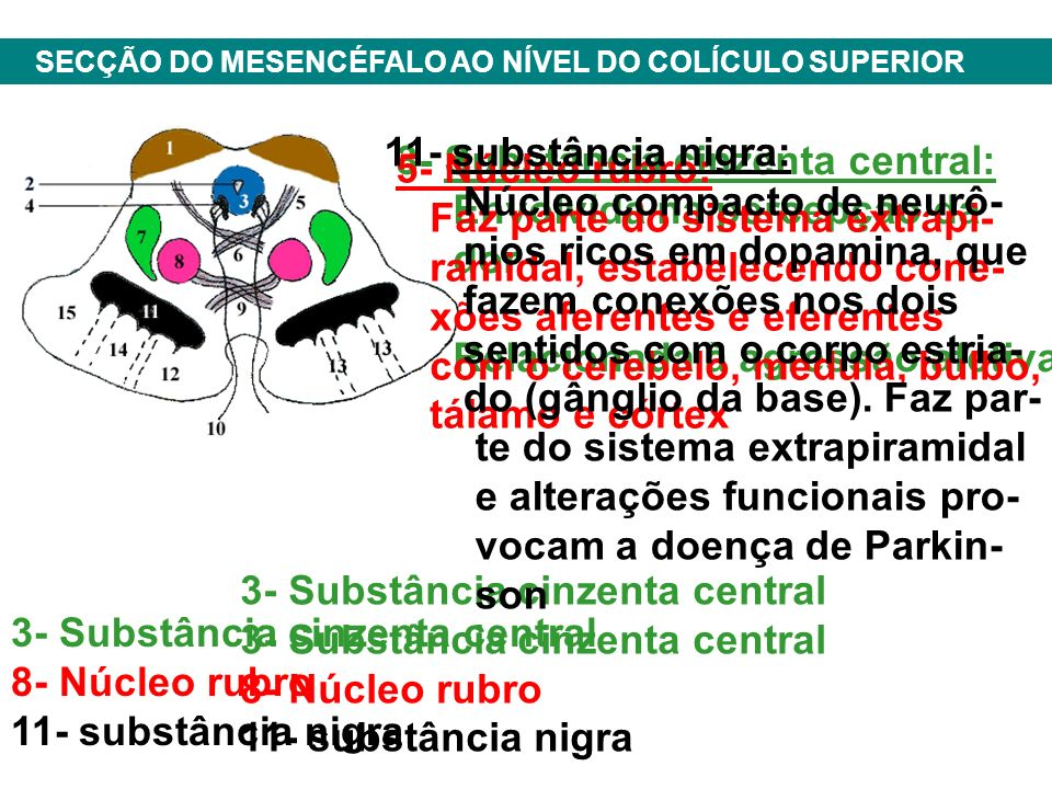 Núcleo compacto de neurô- nios ricos em dopamina, que