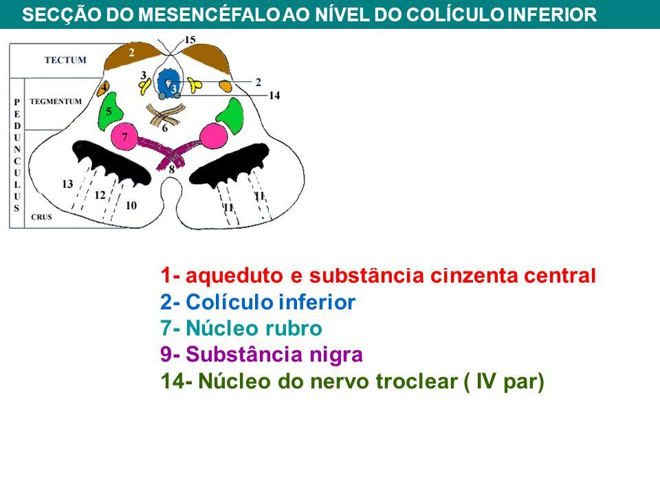 1- aqueduto e substância cinzenta central 2- Colículo inferior