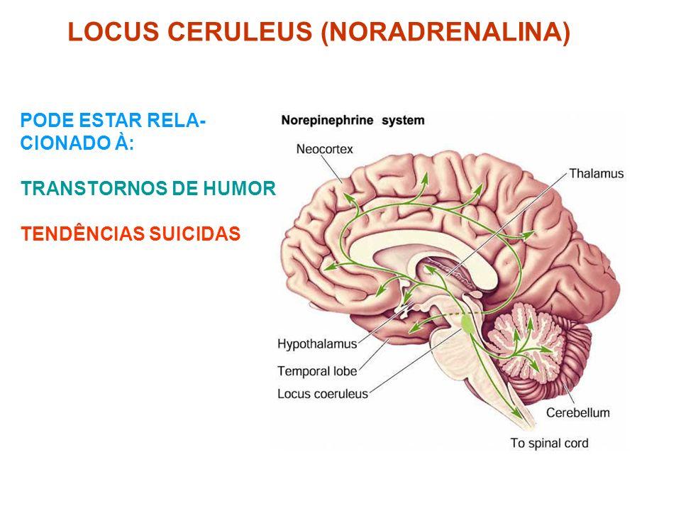 LOCUS CERULEUS (NORADRENALINA)