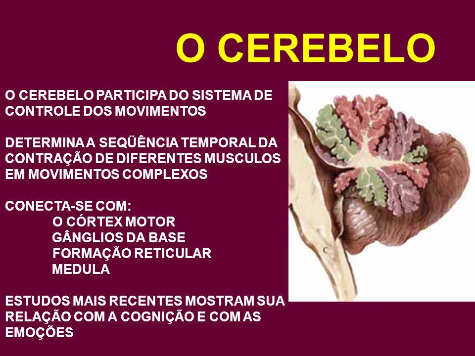 O CEREBELO O CEREBELO PARTICIPA DO SISTEMA DE CONTROLE DOS MOVIMENTOS