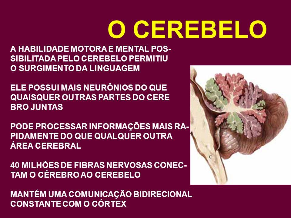 O CEREBELO A HABILIDADE MOTORA E MENTAL POS-