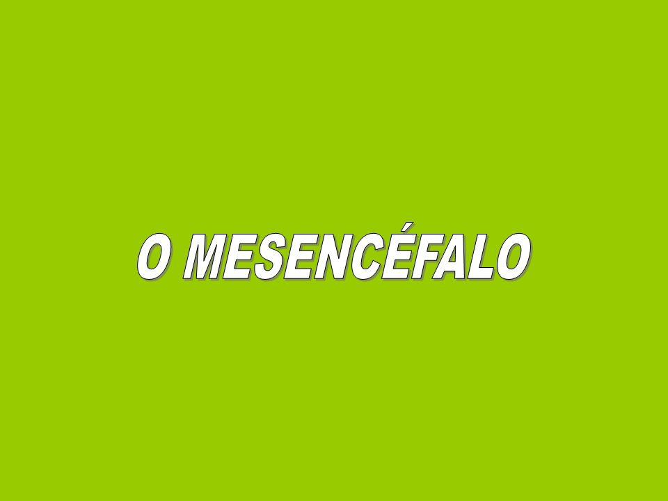 O MESENCÉFALO
