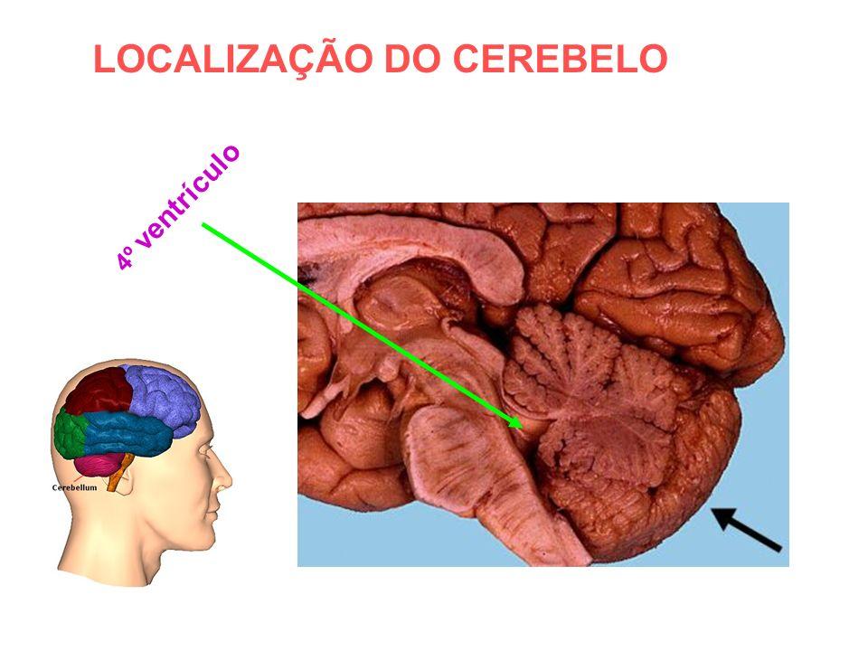 LOCALIZAÇÃO DO CEREBELO
