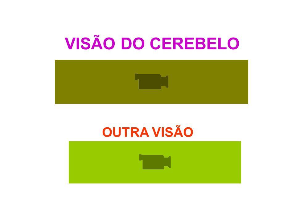 VISÃO DO CEREBELO OUTRA VISÃO