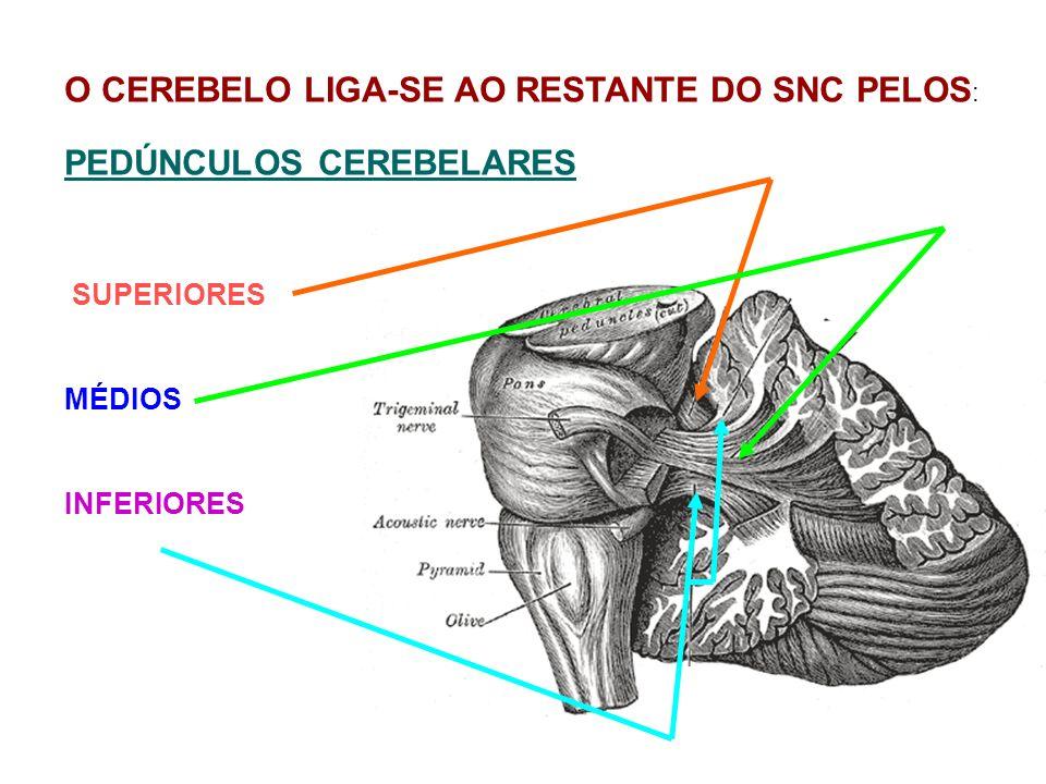O CEREBELO LIGA-SE AO RESTANTE DO SNC PELOS: PEDÚNCULOS CEREBELARES