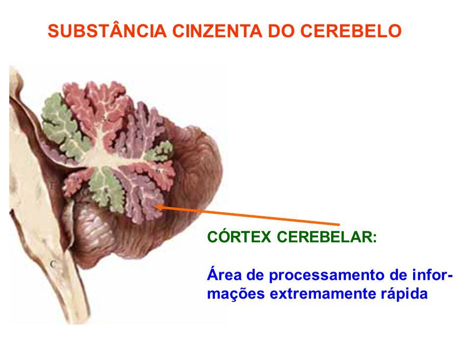 SUBSTÂNCIA CINZENTA DO CEREBELO