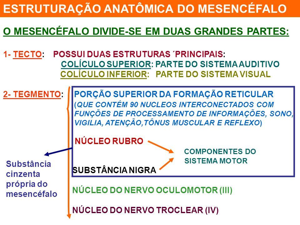 ESTRUTURAÇÃO ANATÔMICA DO MESENCÉFALO