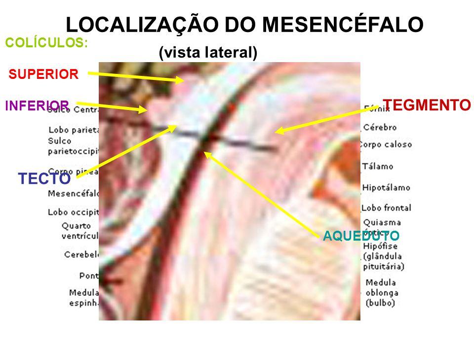 LOCALIZAÇÃO DO MESENCÉFALO (vista lateral)
