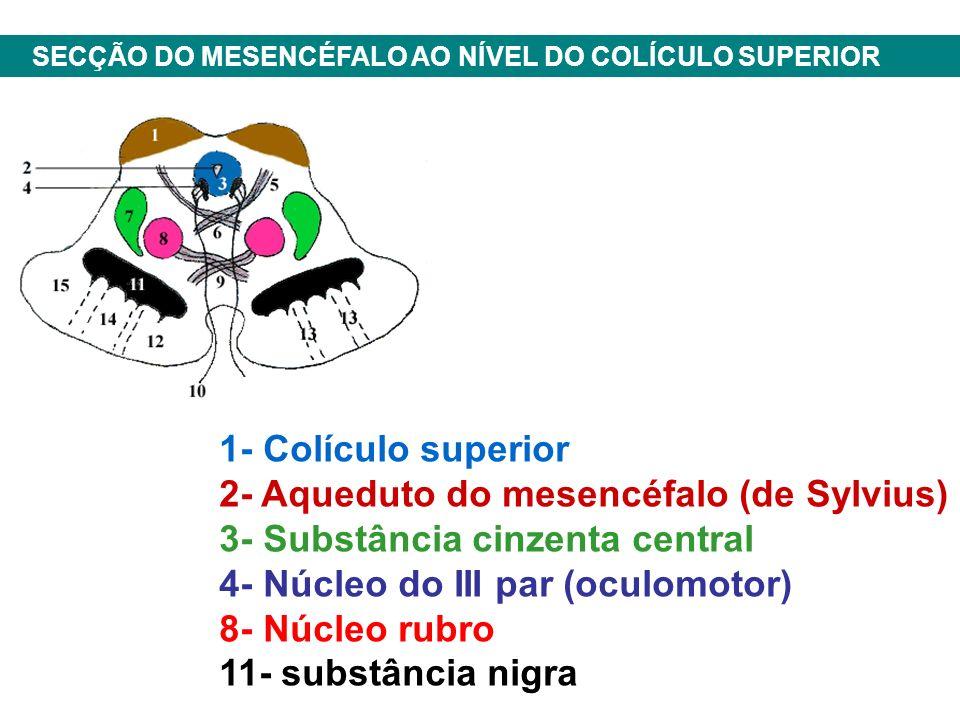 2- Aqueduto do mesencéfalo (de Sylvius) 3- Substância cinzenta central