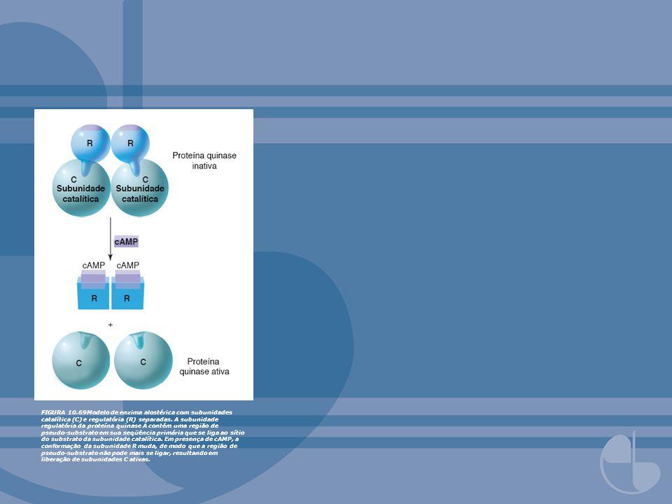 FIGURA 10.69Modelo de enzima alostérica com subunidades catalítica (C) e regulatória (R) separadas.
