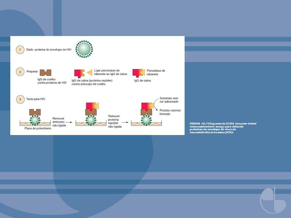 FIGURA 10.72Esquema de ELISA (enzyme-linked immunoadsorbent assay) para detectar proteínas do envelope de vírus da imunodeficiência humana (HIV).