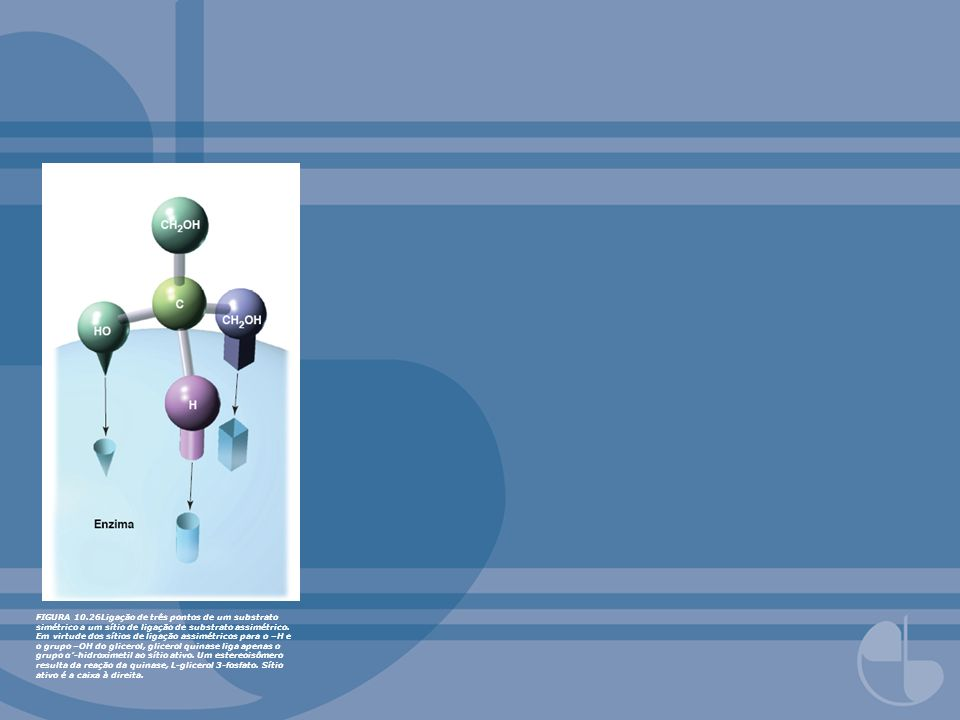 FIGURA 10.26Ligação de três pontos de um substrato simétrico a um sítio de ligação de substrato assimétrico.