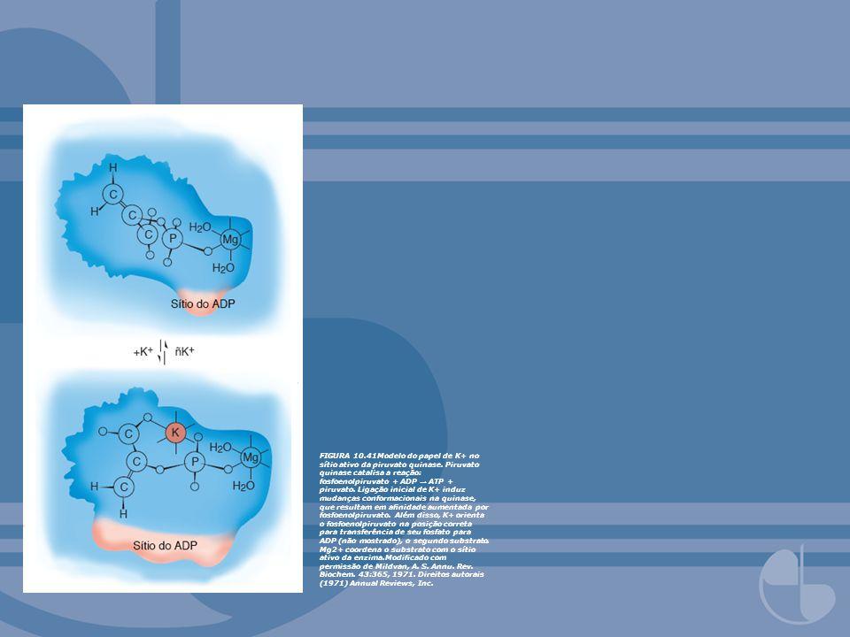 FIGURA 10. 41Modelo do papel de K+ no sítio ativo da piruvato quinase
