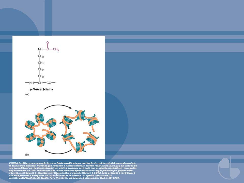 FIGURA 8.18Força de associação histona-DNA é modificada por acetilação de resíduos de lisina na extremidade N-terminal de histonas.