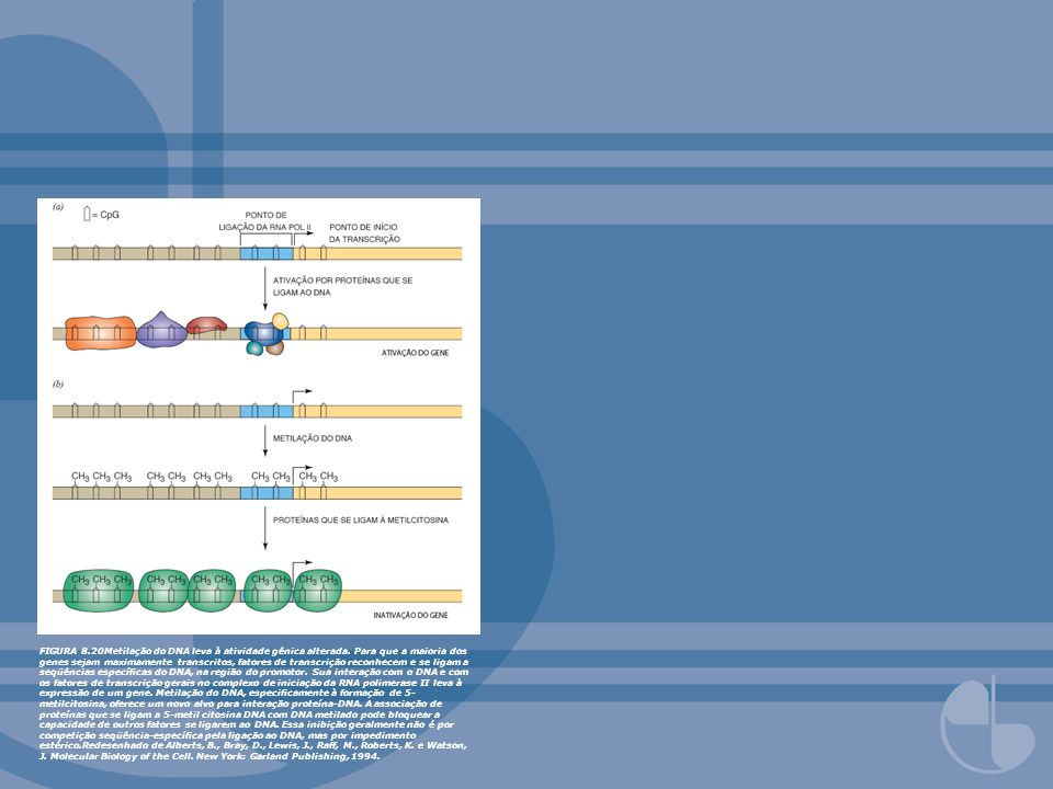 FIGURA 8. 20Metilação do DNA leva à atividade gênica alterada