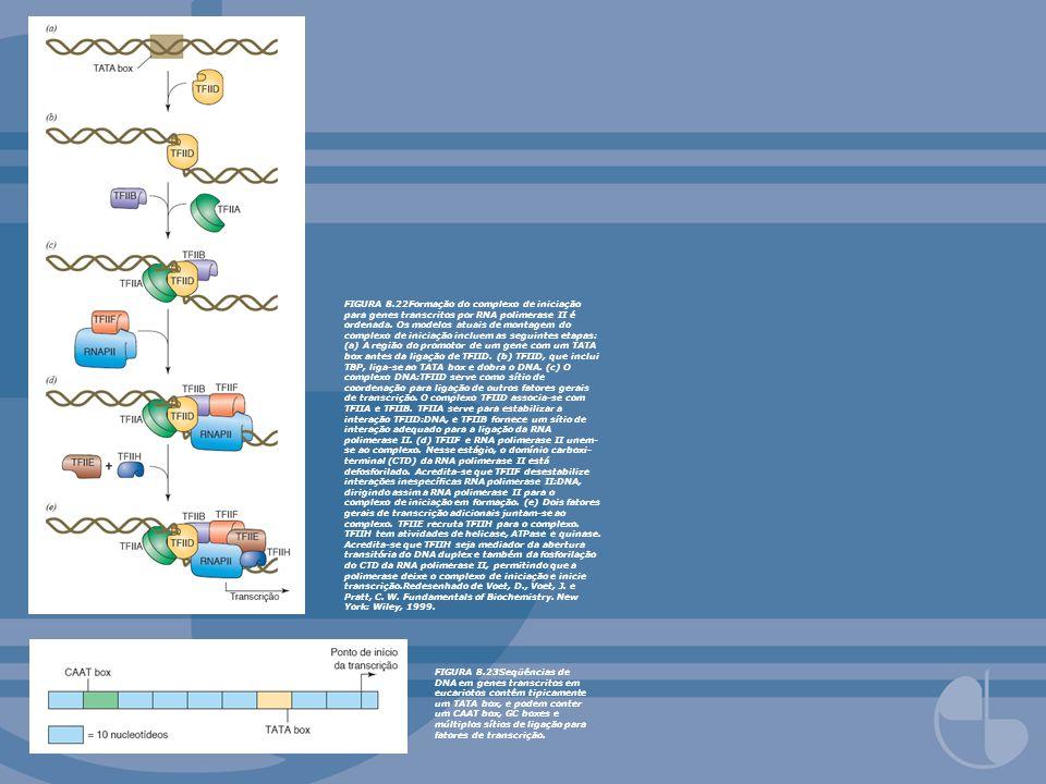 FIGURA 8.22Formação do complexo de iniciação para genes transcritos por RNA polimerase II é ordenada. Os modelos atuais de montagem do complexo de iniciação incluem as seguintes etapas: (a) A região do promotor de um gene com um TATA box antes da ligação de TFIID. (b) TFIID, que inclui TBP, liga-se ao TATA box e dobra o DNA. (c) O complexo DNA:TFIID serve como sítio de coordenação para ligação de outros fatores gerais de transcrição. O complexo TFIID associa-se com TFIIA e TFIIB. TFIIA serve para estabilizar a interação TFIID:DNA, e TFIIB fornece um sítio de interação adequado para a ligação da RNA polimerase II. (d) TFIIF e RNA polimerase II unem-se ao complexo. Nesse estágio, o domínio carboxi-terminal (CTD) da RNA polimerase II está defosforilado. Acredita-se que TFIIF desestabilize interações inespecíficas RNA polimerase II:DNA, dirigindo assim a RNA polimerase II para o complexo de iniciação em formação. (e) Dois fatores gerais de transcrição adicionais juntam-se ao complexo. TFIIE recruta TFIIH para o complexo. TFIIH tem atividades de helicase, ATPase e quinase. Acredita-se que TFIIH seja mediador da abertura transitória do DNA duplex e também da fosforilação do CTD da RNA polimerase II, permitindo que a polimerase deixe o complexo de iniciação e inicie transcrição.Redesenhado de Voet, D., Voet, J. e Pratt, C. W. Fundamentals of Biochemistry. New York: Wiley, 1999.