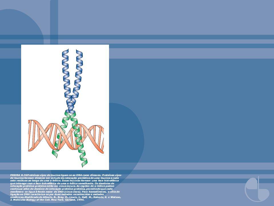 FIGURA 8. 26Proteínas zíper de leucina ligam-se ao DNA como dímeros